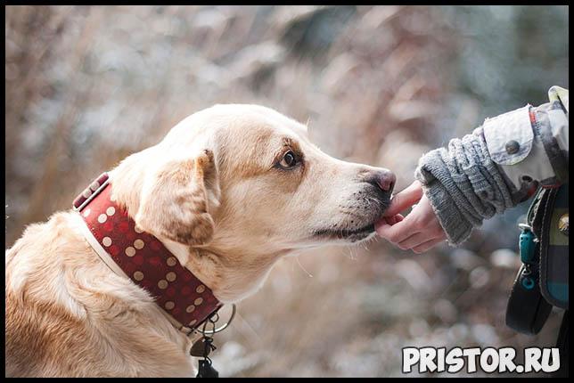 Сколько раз в день нужно кормить собаку Режим питания для собаки 4
