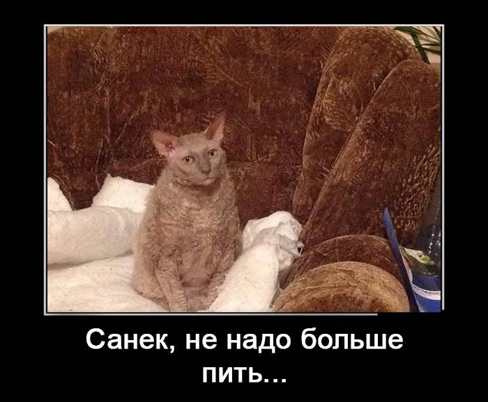 Смешные демотиваторы про алкоголь - смотреть бесплатно, 2017 8