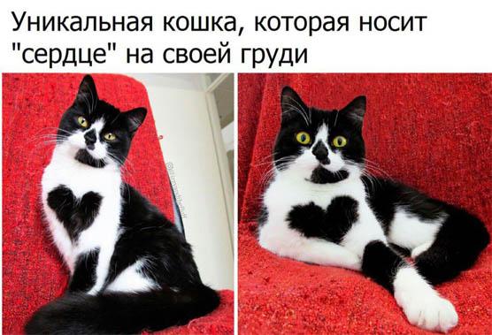 Смешные картинки про животных - скачать, смотреть бесплатно 10