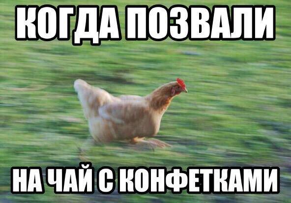 Смешные картинки про животных - скачать, смотреть бесплатно 13