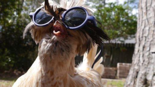 Смешные картинки про животных - скачать, смотреть бесплатно 7