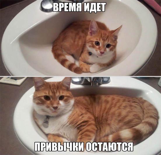 Смешные картинки с животными с надписями - смотреть подборку 10
