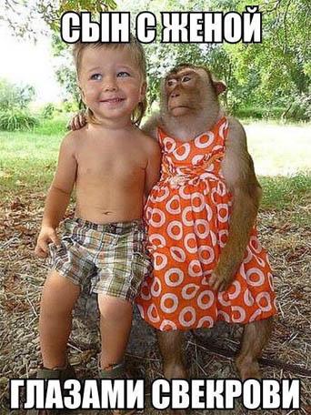 Смешные картинки с животными с надписями - смотреть подборку 12