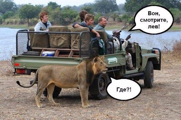 Смешные картинки с животными с надписями - смотреть подборку 14