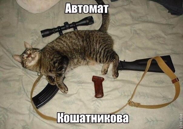 Смешные картинки с животными с надписями - смотреть подборку 3