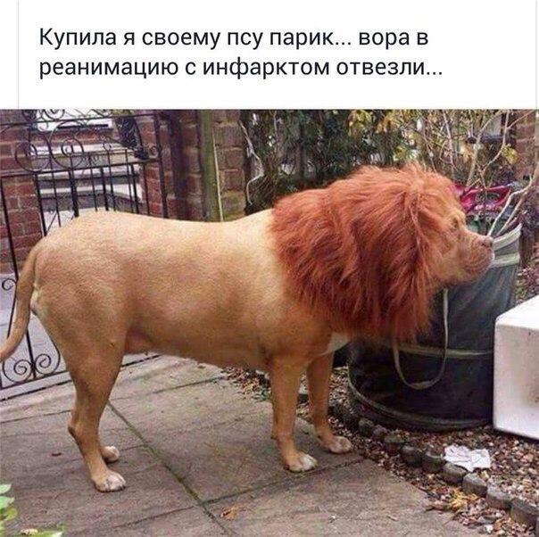 Смешные картинки с животными с надписями - смотреть подборку 6