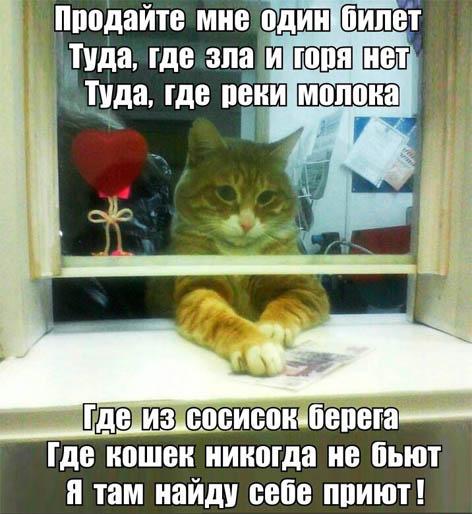 Смешные картинки с животными с надписями - смотреть подборку 9