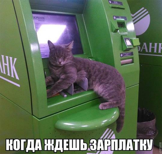 Смешные картинки про животных с надписями новые 10