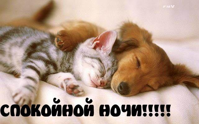 Спокойной ночи картинки - прикольные, смешные, забавные 1