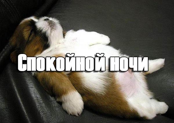 Спокойной ночи картинки - прикольные, смешные, скачать бесплатно 4