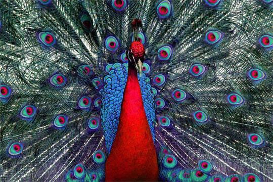 Топ-10 самых красивых и ярких птиц - фото и описание 2