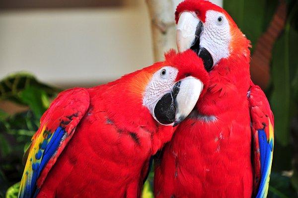 Топ-10 самых красивых и ярких птиц - фото и описание 3