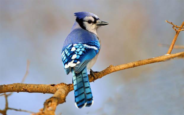 Топ-10 самых красивых и ярких птиц - фото и описание 4