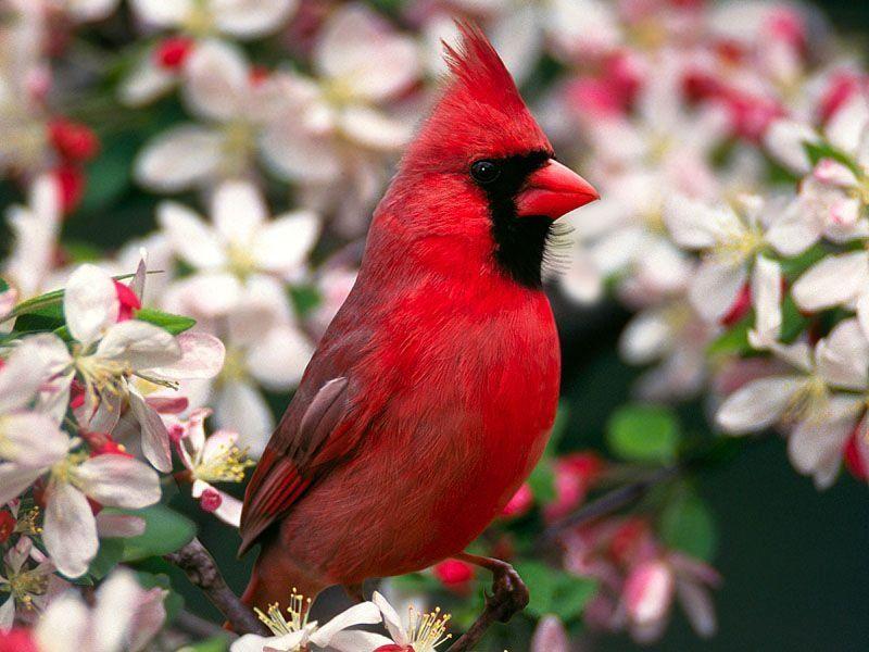 Топ-10 самых красивых и ярких птиц - фото и описание 5