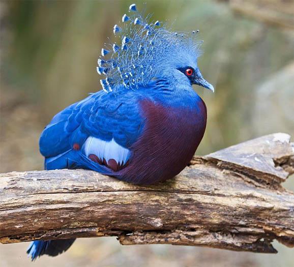 Топ-10 самых красивых и ярких птиц - фото и описание 6