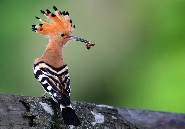 Топ-10 самых красивых и ярких птиц - фото и описание 7
