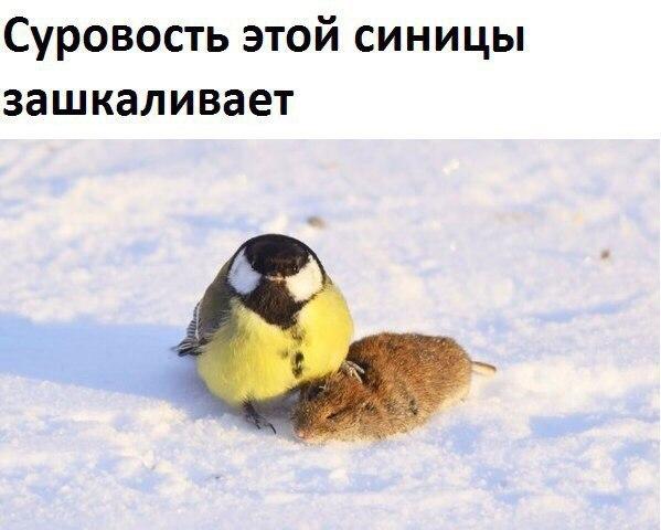 Фото и картинки смешных животных до слез - смотреть бесплатно 13