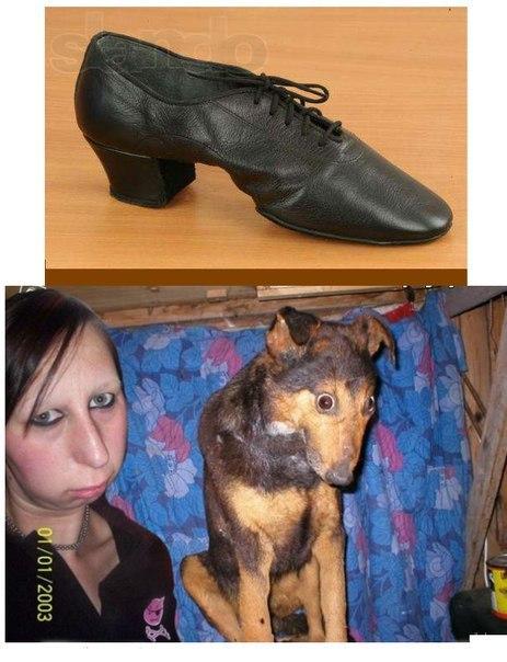 Фото и картинки смешных животных до слез - смотреть бесплатно 2