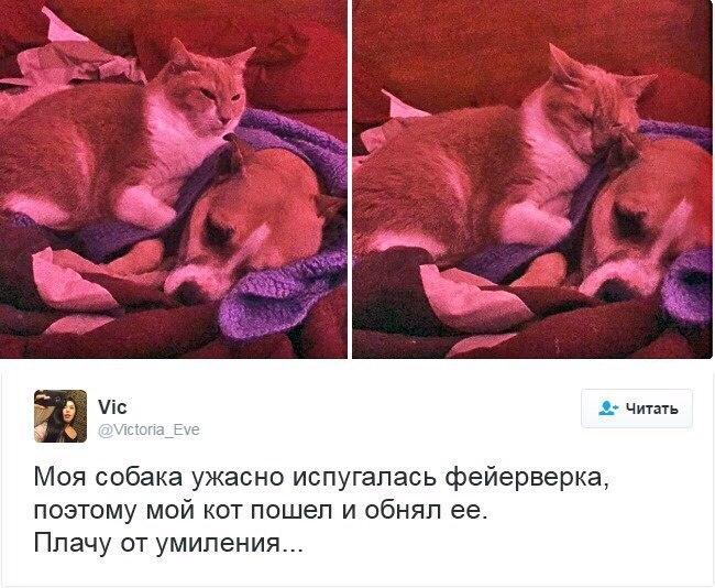 Фото и картинки смешных животных до слез - смотреть бесплатно 4