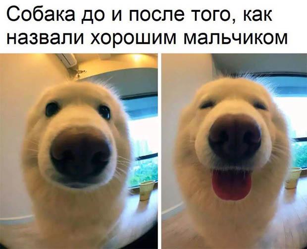 Фото и картинки смешных животных до слез - смотреть бесплатно 8