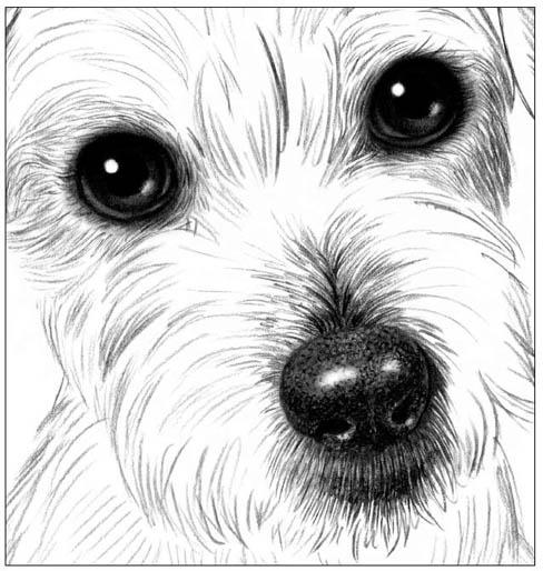 Как рисовать шерсть или мех животных - советы для начинающих 1