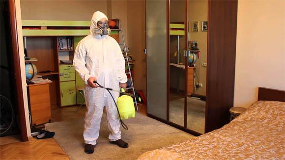 Как избавиться от блох в квартире - самостоятельно, быстро 5