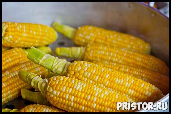 Как правильно и сколько варить кукурузу по времени - важные советы 1