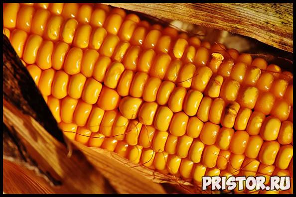 Как правильно и сколько варить кукурузу по времени - важные советы 2