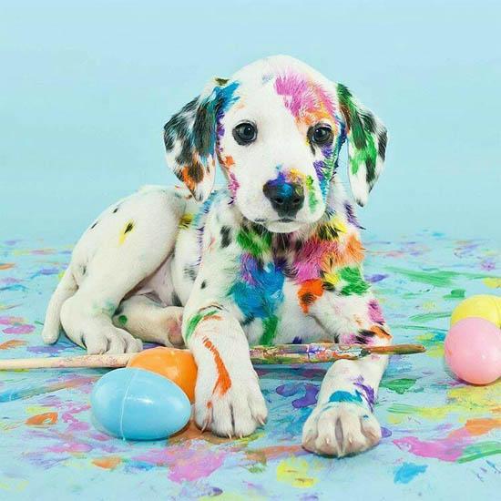 Картинки на аву щенки - красивые, прикольные, классные, крутые 5