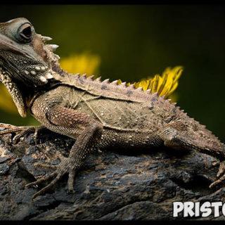 Почему ящерица отбрасывает хвост - интересное в мире 3