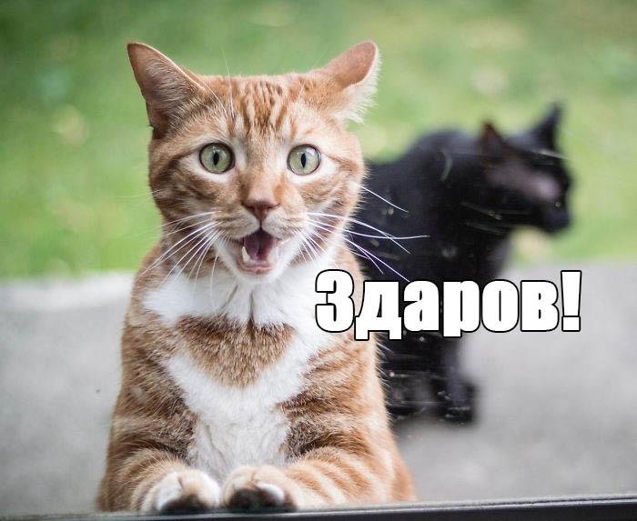 Картинки животных смотреть онлайн бесплатно