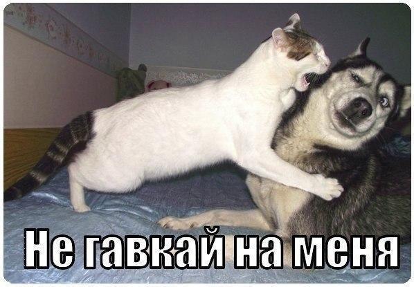 Скачать смешные картинки с животными - прикольные, веселые 1