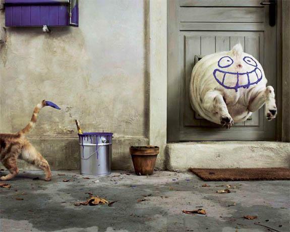 Скачать смешные картинки с животными - прикольные, веселые 12