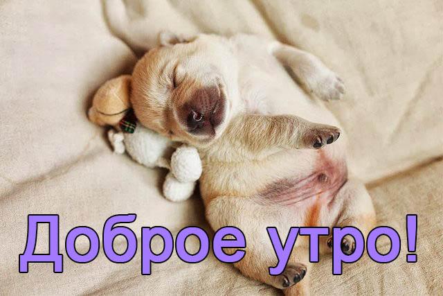 Смешные картинки С добрым утром - веселые, забавные, смотреть 11