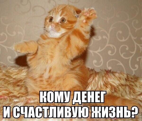 Смешные картинки животных с надписями до слез - смотреть бесплатно 1