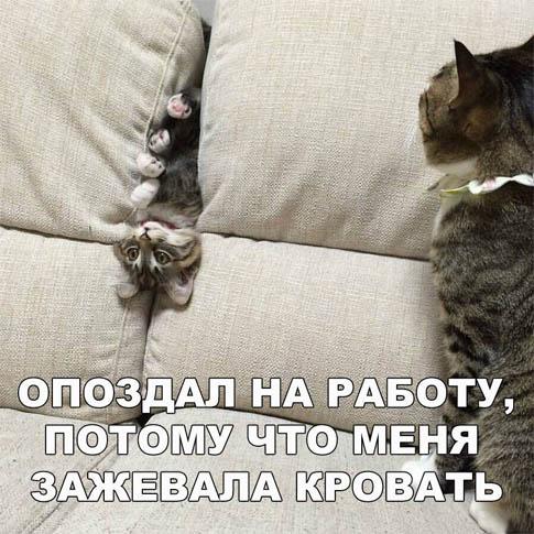 Смешные картинки животных с надписями до слез - смотреть бесплатно 10