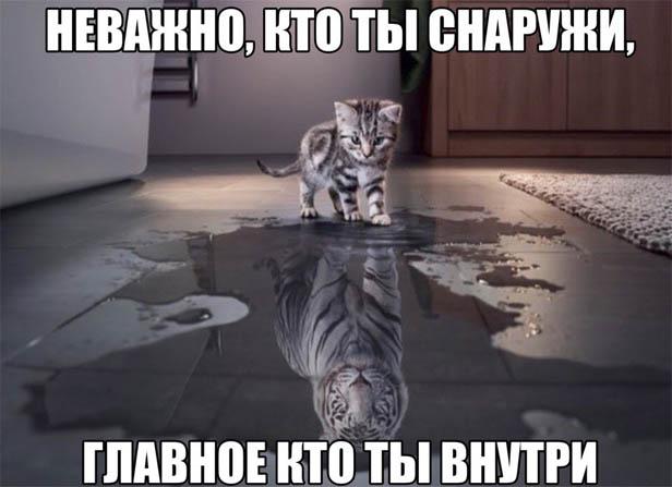 Смешные картинки животных с надписями до слез - смотреть бесплатно 12