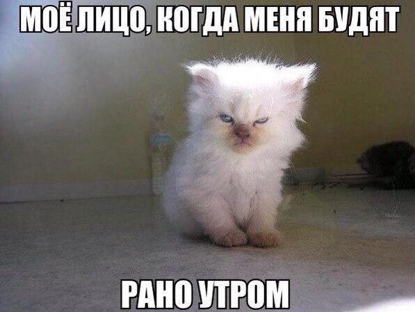 Смешные картинки животных с надписями до слез - смотреть бесплатно 14