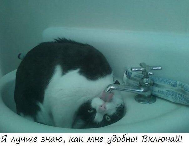 Смешные картинки животных с надписями до слез - смотреть бесплатно 3