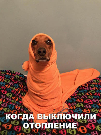 Смешные картинки животных с надписями до слез - смотреть бесплатно 5