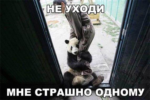 Смешные картинки животных с надписями до слез - смотреть бесплатно 7