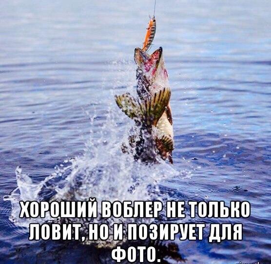 Смешные картинки про рыбалку - прикольные, ржачные, веселые 12