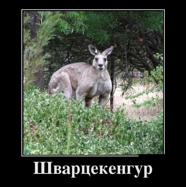 Демотиваторы и приколы с надписями - веселые, смешные, 2017 12