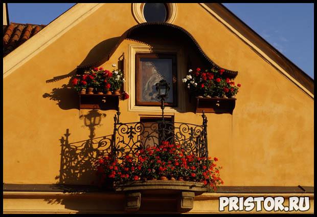 Как вырастить цветы на балконе в домашних условиях - советы и помощь 1