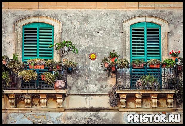 Как вырастить цветы на балконе в домашних условиях - советы и помощь 2