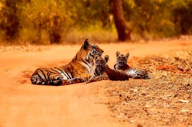 Красивые и удивительные картинки животных - животный мир, фото 1