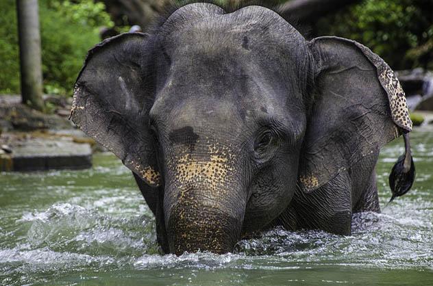 Красивые и удивительные картинки животных - животный мир, фото 12