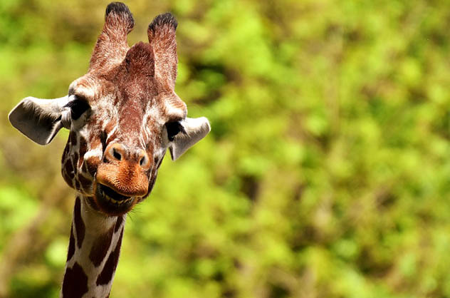 Красивые и удивительные картинки животных - животный мир, фото 13