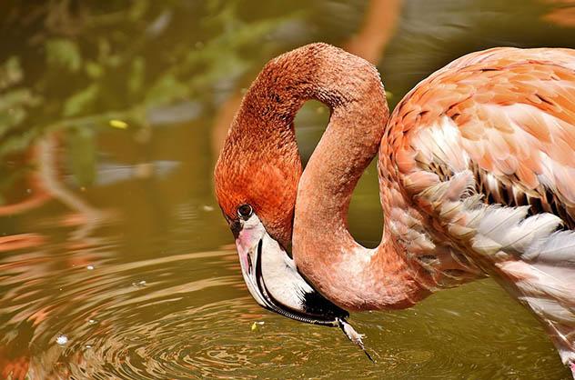 Красивые и удивительные картинки животных - животный мир, фото 14