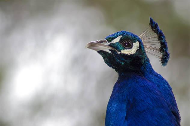 Красивые и удивительные картинки животных - животный мир, фото 3